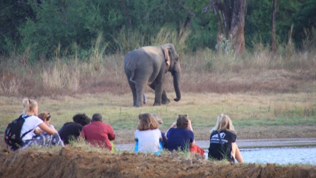Volunteers watch an elephant walk around a watering hole in Sri Lanka.
